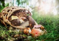 Памятка о профилактике отравлений грибами. Рекомендации по сбору, приготовлению и покупке